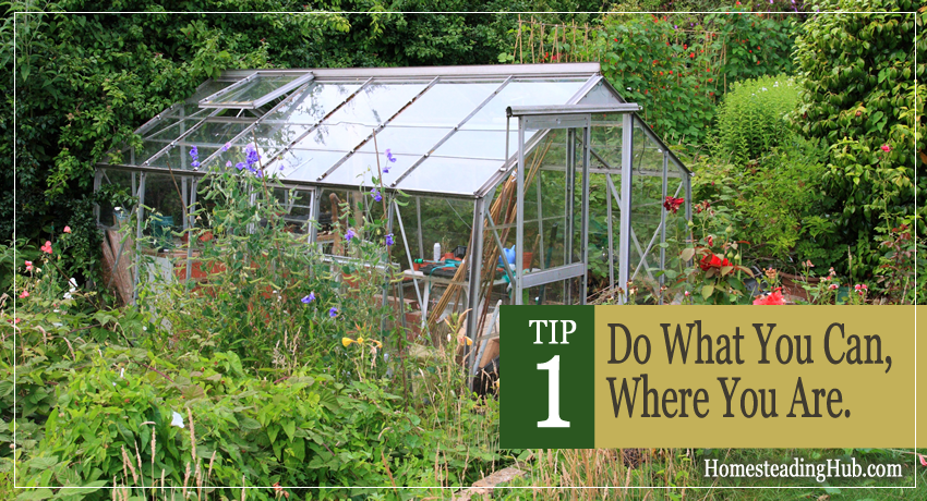TIP 1 For Starting Your Homestead