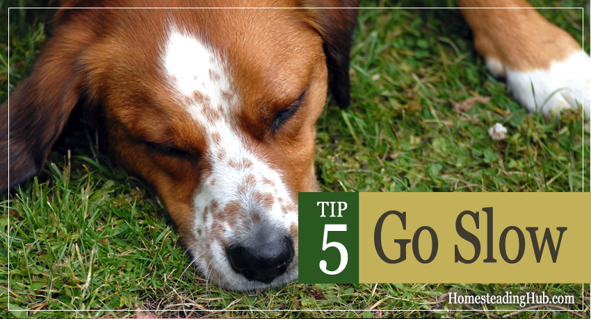 TIP5 For Starting Your Homestead