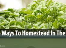 Apartment Homesteading: Top 4 Ways To Homestead In The City!