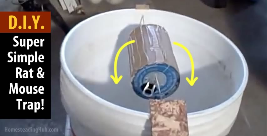 how to catch rats in a bucket