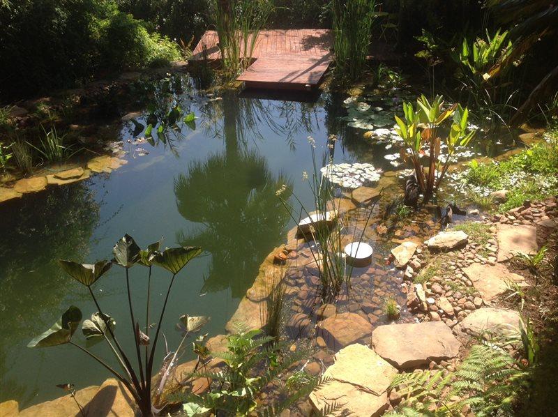 natural swimming pool 3