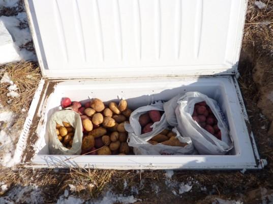Freezer-Root-Cellar-