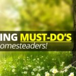 5 Spring Must-Dos For Homesteaders