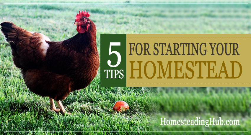 5 Tips For Starting Your Homestead