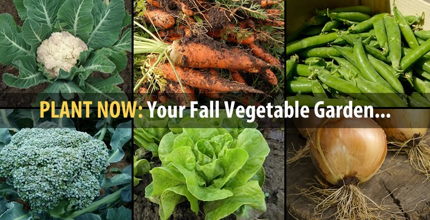 Plant Your Fall Garden