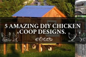 5 Chicken Coops
