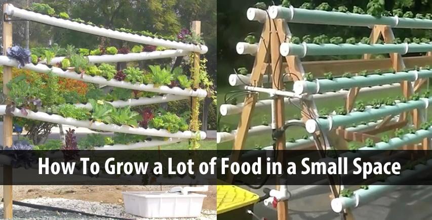 Food That Make Your Feet Grow