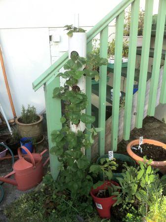PVC vertical planter